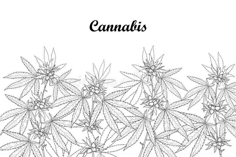Vektorfeld mit Entwurf Hanf Sativa oder Hanf Indica oder Marihuana Niederlassung, Blätter und Samen lokalisiert auf weißem Hinter lizenzfreie abbildung