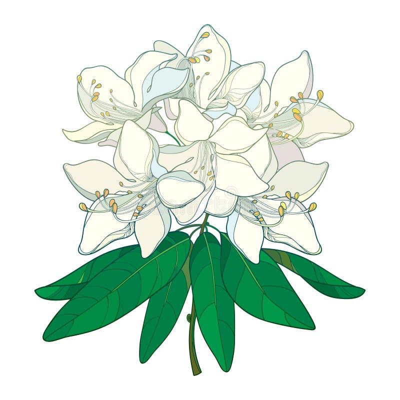 Vektorfilial med översiktsrhododendron eller den alpina rosblomman royaltyfri illustrationer