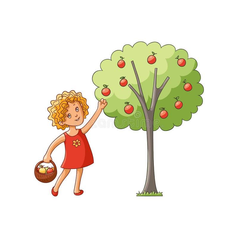 Vektorflicka som samlar äpplen från äppleträd royaltyfri illustrationer