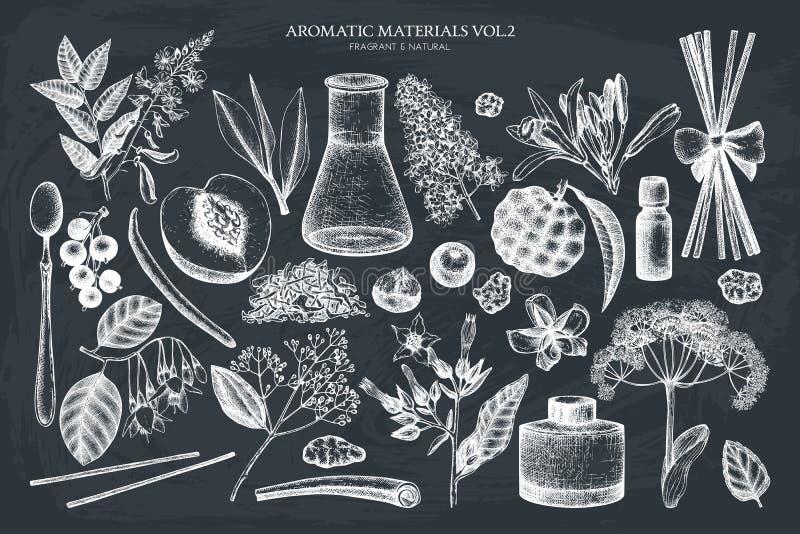 Vektorfrucht- und -blumensammlung Handgezogene Entwürfe Weinleseparfümerie und Kosmetikbestandteilsatz Aromatisch und medizinisch stock abbildung