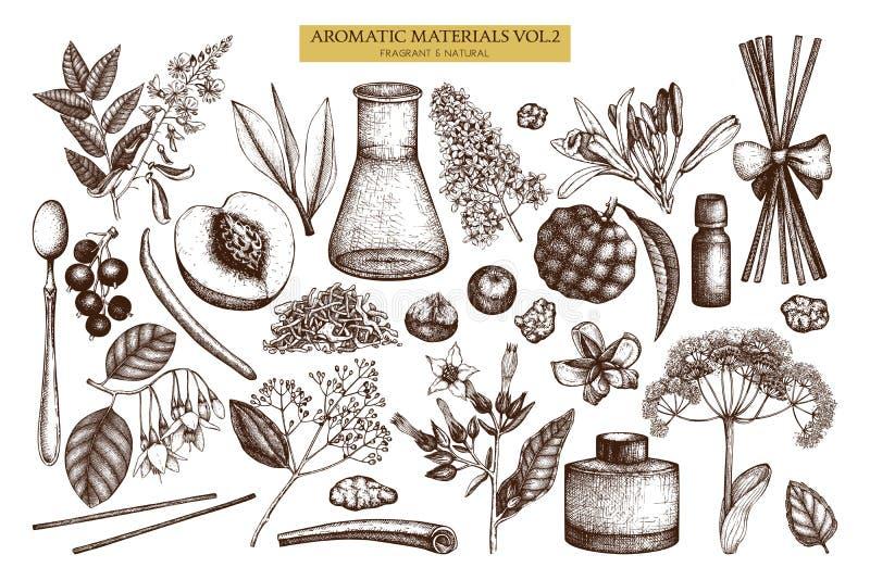 Vektorfrucht- und -blumensammlung Handgezogene Entwürfe Weinleseparfümerie und Kosmetikbestandteilsatz Aromatisch und medizinisch vektor abbildung