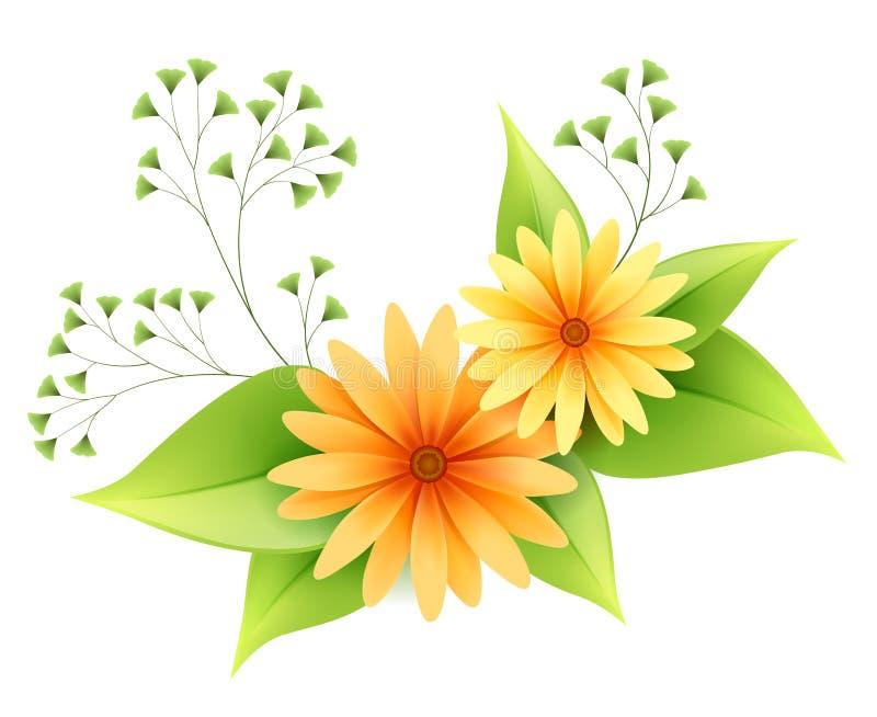 Vektorgänseblümchenblumen mit Laub lizenzfreie abbildung