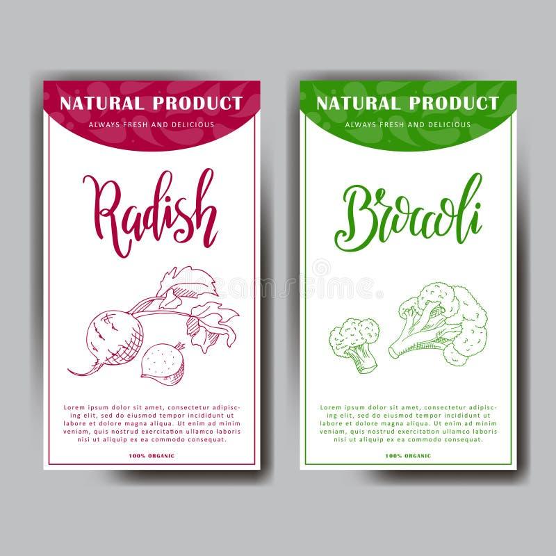 Vektorgemüseelement des Rettichs und des Brokkolis Hand gezeichnete Ikone mit Beschriftung Lebensmittelillustration für Café, Mar vektor abbildung