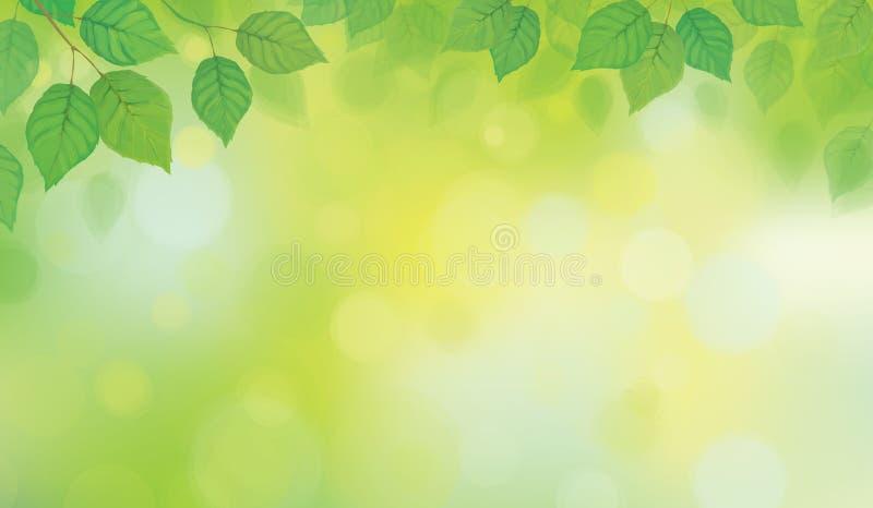 Vektorgräsplan lämnar bokehbakgrund royaltyfri illustrationer