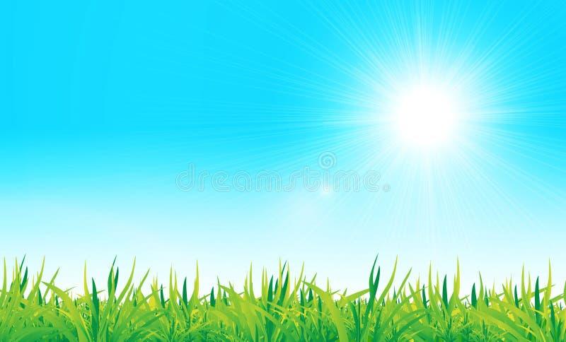 Vektorgrünes Gras und blauer Himmel lizenzfreie abbildung