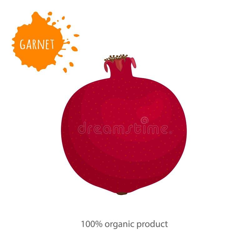 Vektorgranatapfel lokalisiert auf weißem Hintergrund Granatapfel-Frucht-Fahne vektor abbildung