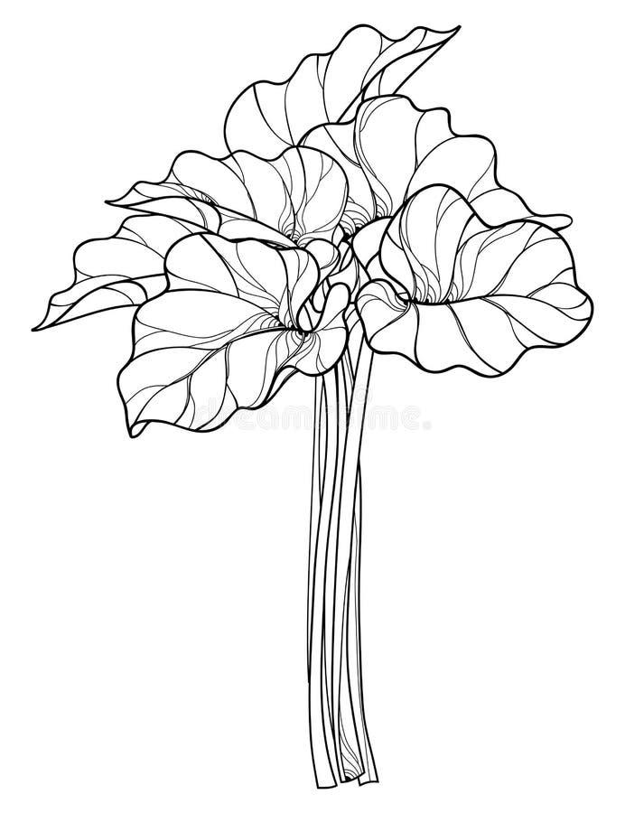Vektorgrupp med översiktsrabarber- eller Rheumgrönsaken i svart som isoleras på vit bakgrund Utsmyckat blad av rabarbergruppen royaltyfri illustrationer