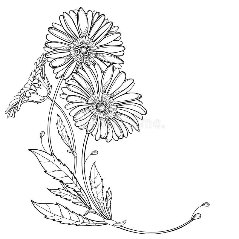 Vektorhörnbukett med översiktsgerberaen eller Gerber blomma och blad i svart som isoleras på vit bakgrund royaltyfri illustrationer