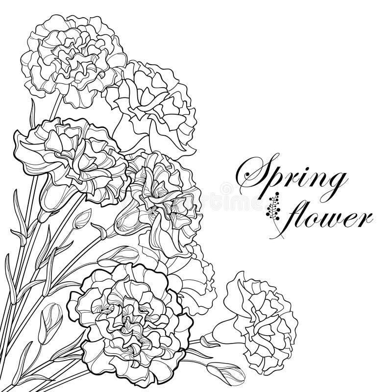 Vektorhörnbukett med blomman för för översiktssvartnejlika eller kryddnejlika, knoppen och bladet som isoleras på vit bakgrund royaltyfri illustrationer