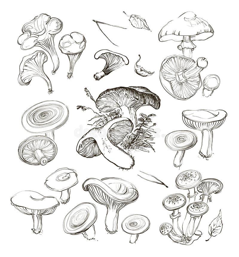 Vektorhand som drar en uppsättning av champinjoner stock illustrationer