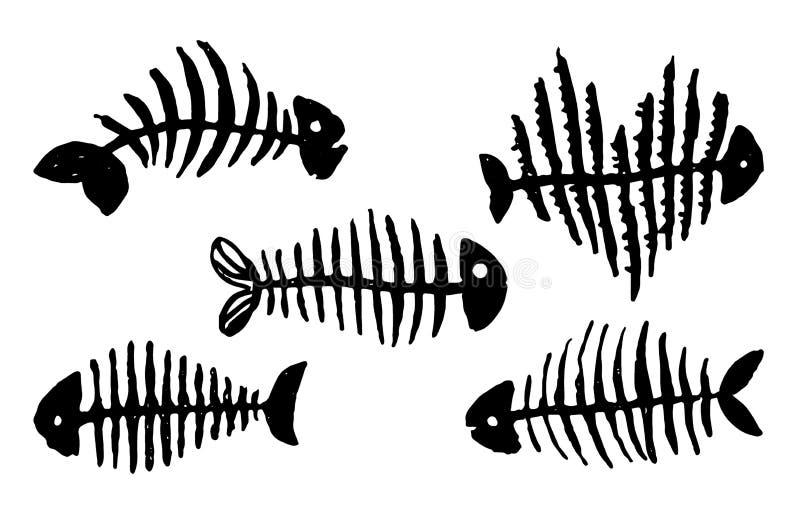 Vektorhand som dras för att skissa av skelett- illustration för fisk på vit bakgrund royaltyfri illustrationer