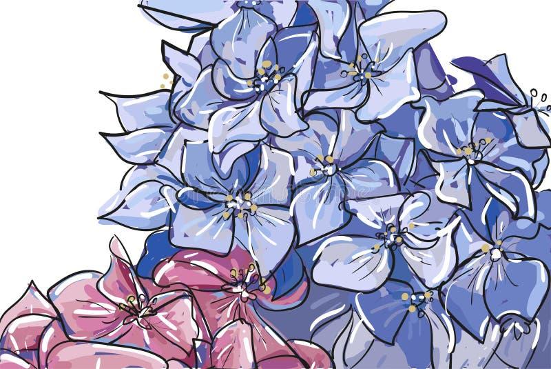 Vektorhandbündel der gezogenen Skizzenzusammenfassungsentwurf Hortensie- oder Hortensiablume im rosa Pastellblau lokalisiert auf  stock abbildung
