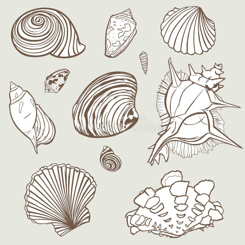 Vektorhandgezogene Elemente von der Muschelparadiessammlung Elemententwurf für Einladungen, Grußkarten, Plakate vektor abbildung