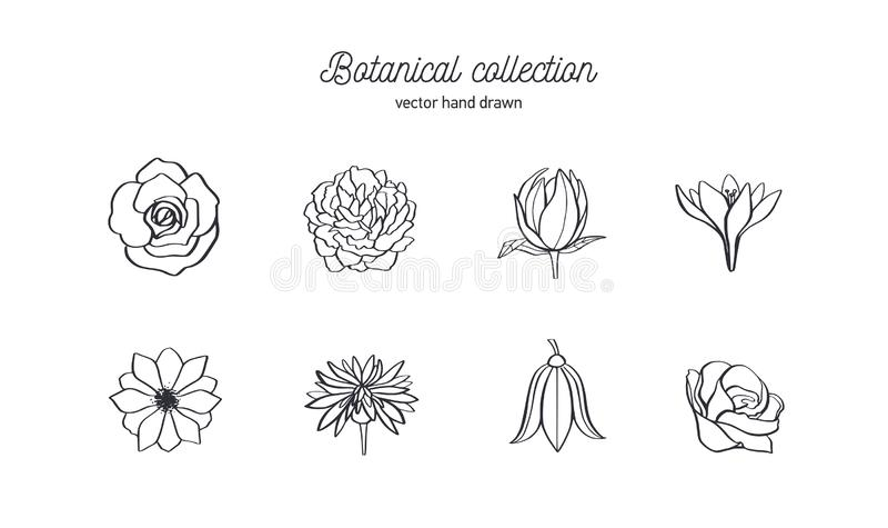 Vektorhandgezogener Satz wilde Blumen Rosen, Pfingstrose, Anemone und andere Kritzeln Sie botanische Illustration der Art stock abbildung