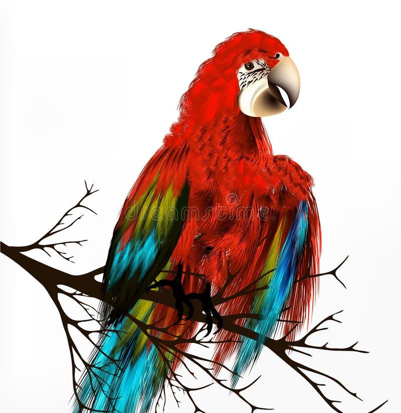 Bunter vektorrealistischer tropischer Vogel sitzen eine Niederlassung auf Weiß stock abbildung