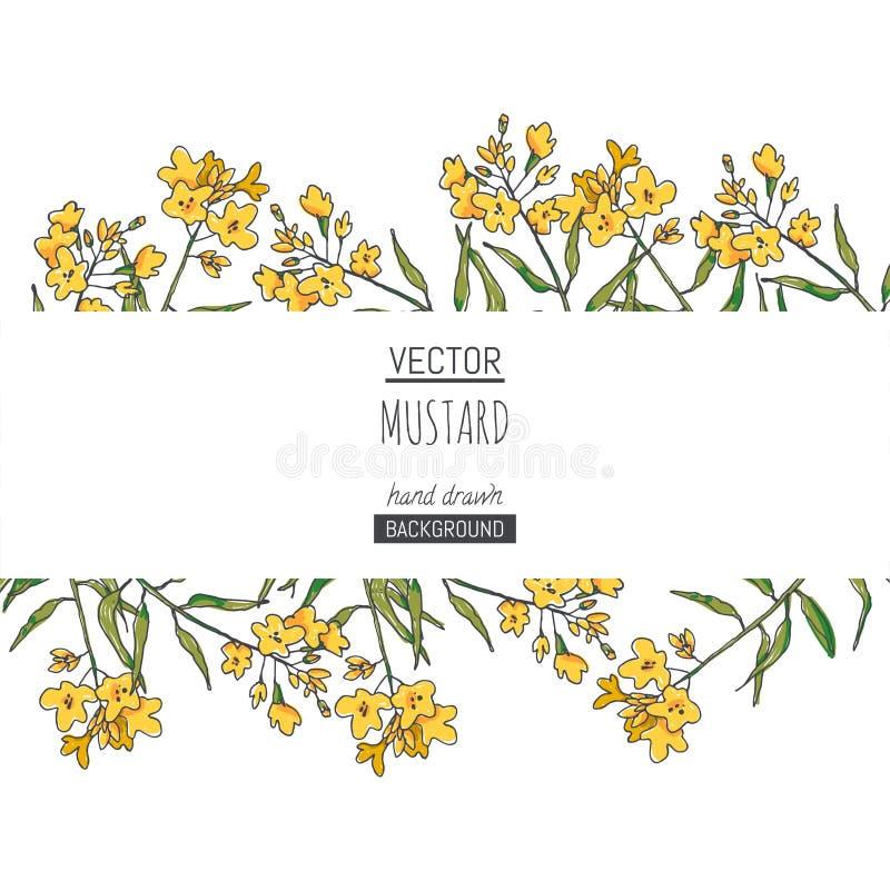 Vektorhintergrund mit Senfniederlassungen mit Blumen Handgezogene botanische Beschaffenheit mit Kraut Skizze für Blumenmuster lizenzfreie abbildung
