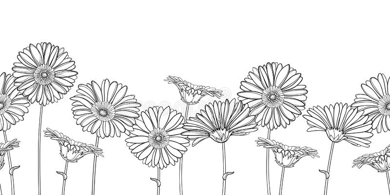 Vektorhorisontalsömlös modell med den översiktsgerbera- eller Gerber blomman i svart på den vita bakgrunden blom- kant vektor illustrationer