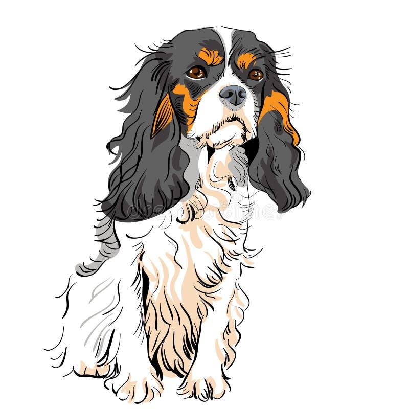 Vektorhundeunbekümmerter Königcharles Spaniel stock abbildung