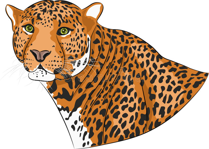 Vektorhuvud av en jaguar stock illustrationer