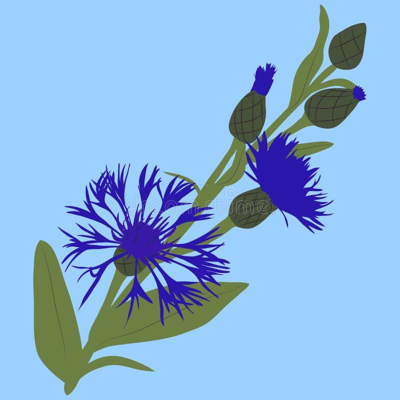Vektorillustration av av den blåa knapweeden royaltyfri illustrationer