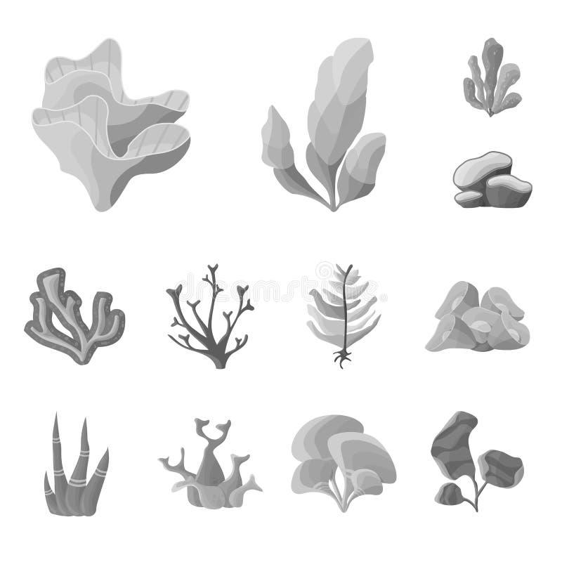 Vektorillustration av den botanisk och florasymbolen Ställ in av det botanisk och naturmaterielsymbolet för rengöringsduk royaltyfri illustrationer