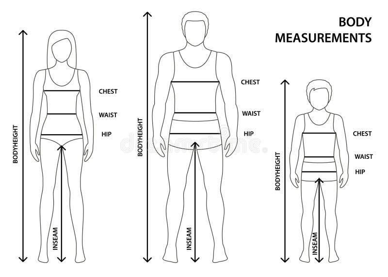 Vektorillustration av den drog upp konturerna av mannen, kvinnor och den oavkortade längden för pojke med mätningslinjer av kropp royaltyfri illustrationer