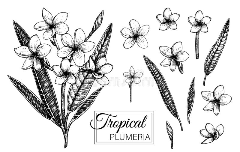 Vektorillustration av den tropiska blomman som isoleras p? vit bakgrund stock illustrationer