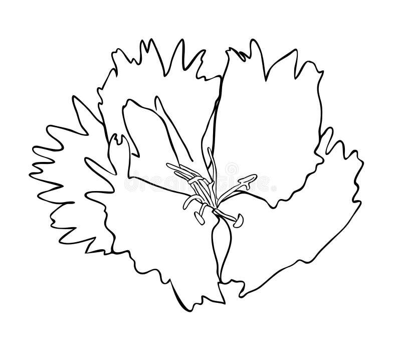 Vektorillustration av dianthusblomman royaltyfri illustrationer