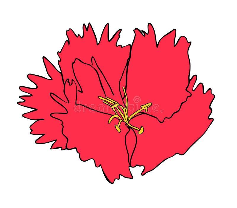Vektorillustration av dianthusblomman vektor illustrationer