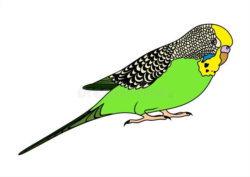 Vektorillustration av grön budgie royaltyfri illustrationer