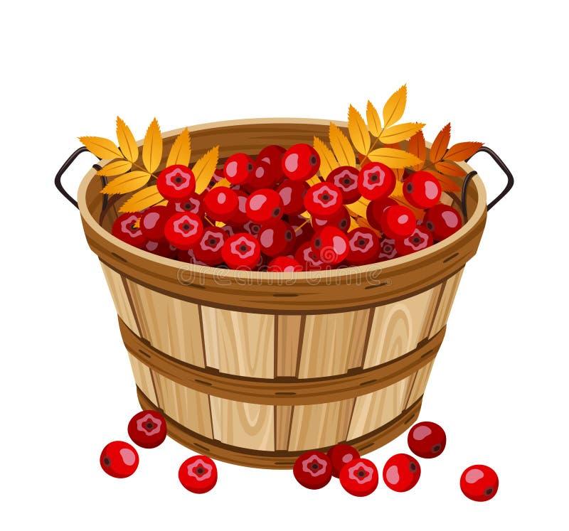 Vektorillustration av korgen med rönnbär. stock illustrationer