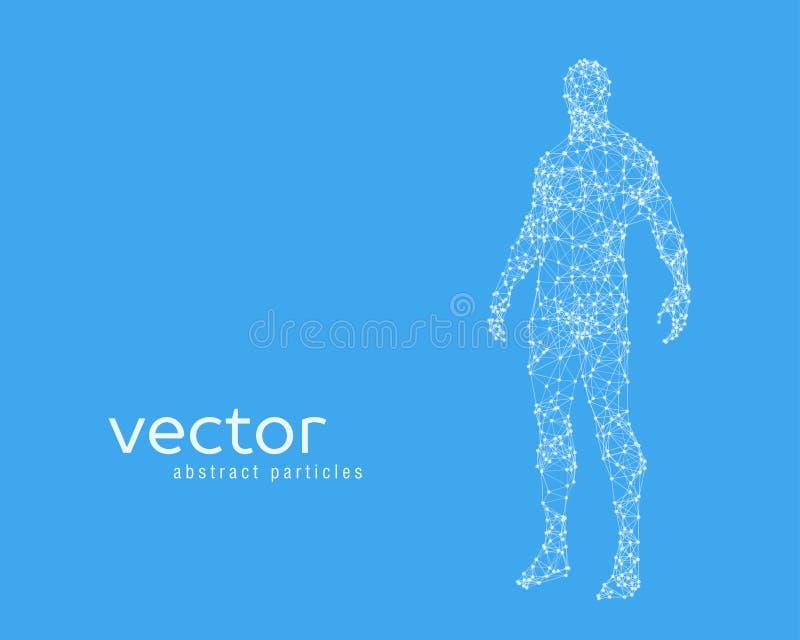 Vektorillustration av människokroppen stock illustrationer