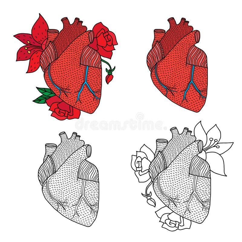 Vektorillustration av mänsklig hjärta som isoleras på vit bakgrund royaltyfri illustrationer