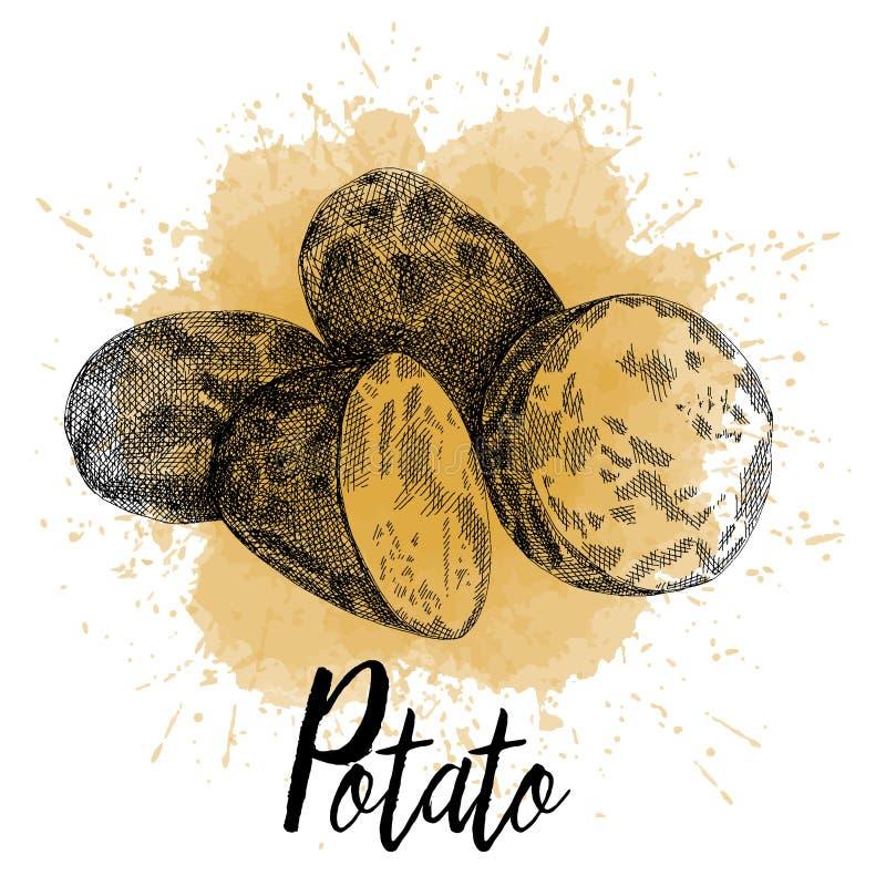 Vektorillustration av potatis föreställde hand-drog diagram royaltyfri illustrationer