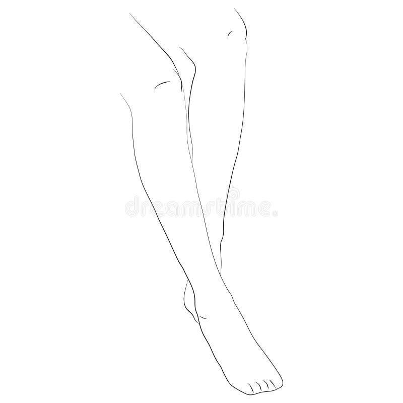 Vektorillustration av slanka kvinnliga ben stock illustrationer