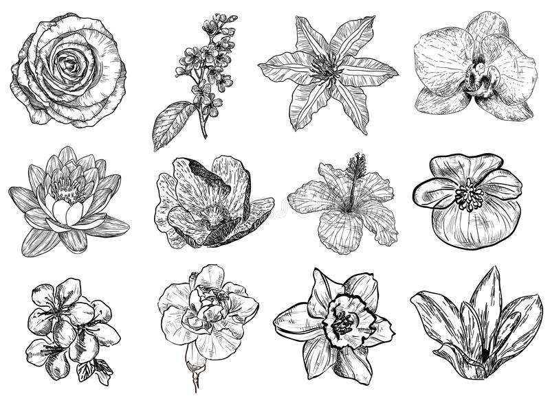Vektorillustration av (svartvita) blommor, stock illustrationer