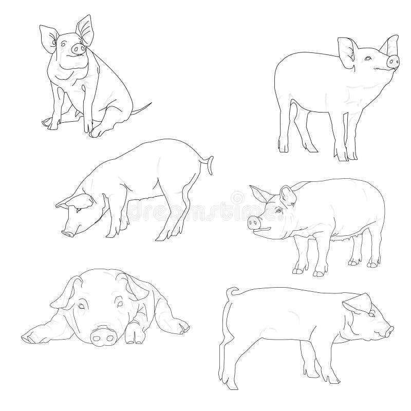 Vektorillustration av svinet i grafisk stil stock illustrationer
