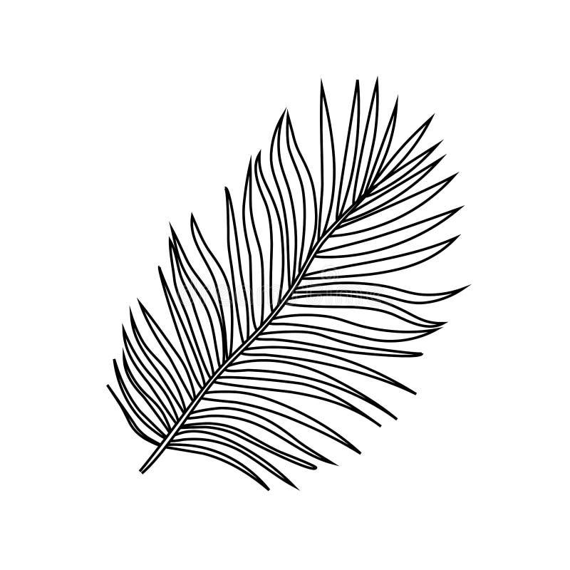 Vektorillustration av tropiska exotiska palmträdsidor för svart översikt stock illustrationer