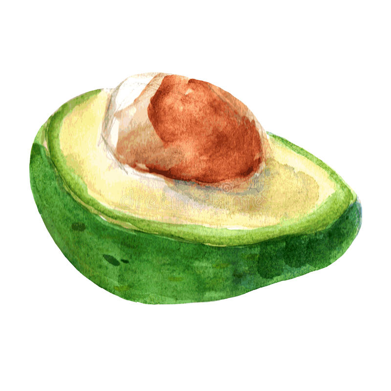 Vektorillustration der Avocado watercolor lizenzfreie abbildung