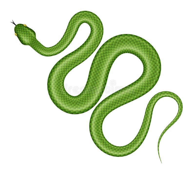 Vektorillustration der grünen Schlange lizenzfreie abbildung