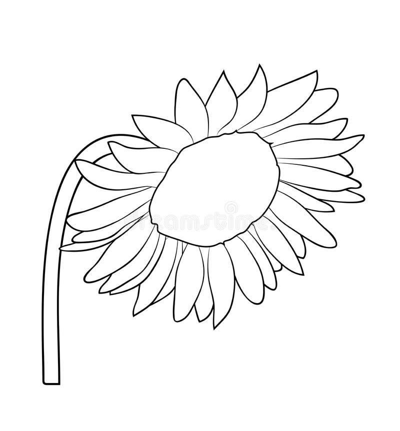 Vektorillustration der lokalisierten Sonnenblume vektor abbildung