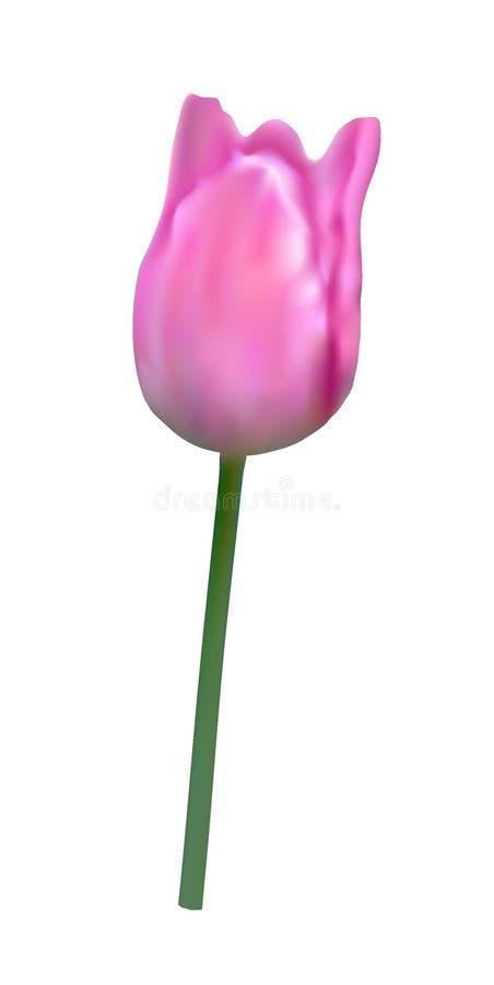 Vektorillustration der Tulpe im Stil der Aquarellmalerei lizenzfreie abbildung
