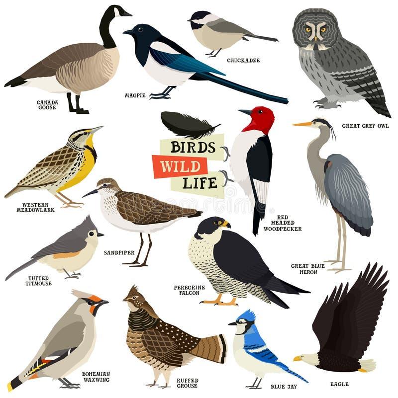 Vektorillustration der 14 Vögel lokalisierte Gegenstände geometrischen Stil vektor abbildung