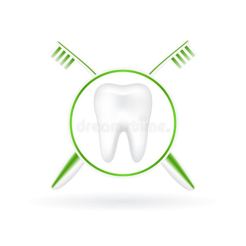Vektorillustration des realistischen Zahnes mit Zahnbürsten vektor abbildung