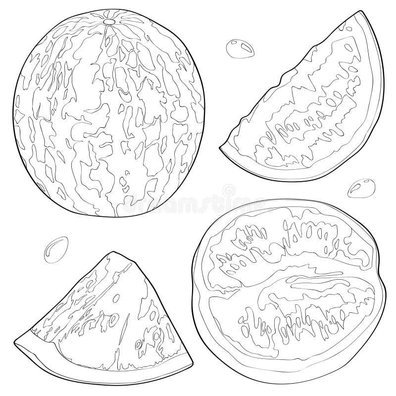Vektorillustration einer Wassermelone, halbe Wassermelone, eine Scheibe der Wassermelone Schwarze Zeile vektor abbildung