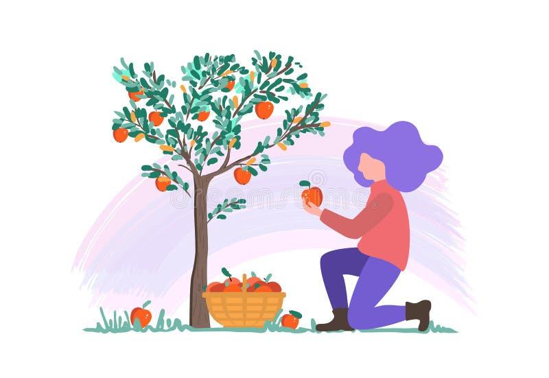 Vektorillustration eines jungen Mädchens, das Äpfel im Garten, flachen Entwurf erntend auswählt lizenzfreie abbildung
