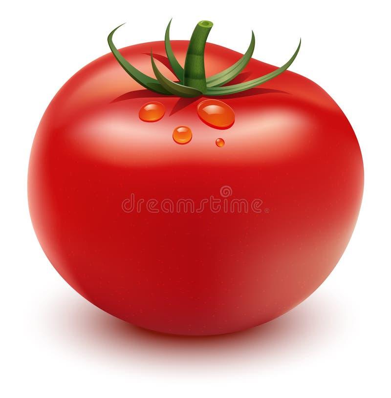 Rote Tomate lizenzfreie abbildung