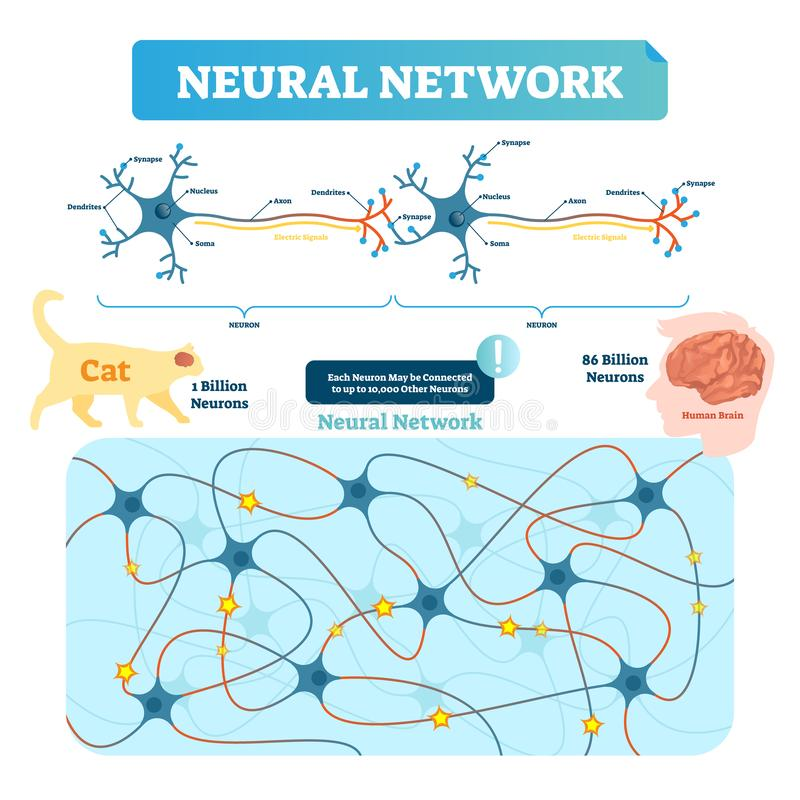Vektorillustration för nerv- nätverk Neuronstruktur och netto diagram vektor illustrationer