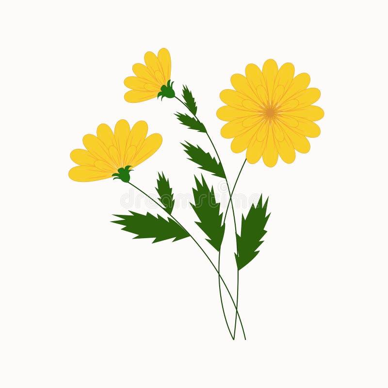 Vektorillustration, härliga gulingblommor royaltyfri illustrationer