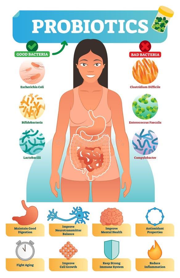 Vektorillustration med probiotics Medicinska bakterier och samlingsaffisch för vård- fördelar med escherichia och bifidobacteria royaltyfri illustrationer